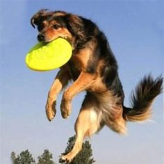 Pet Dog Puppy Toy Fun Frisbee Training Toy Silicone Flying Disc Random Color Pet Products