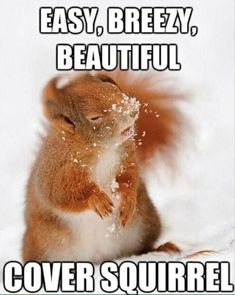 easy, breezy, beautiful cover squirrel lol The longer I look it at it, the funnier it gets! Funny Animal Memes, Funny Animal Pictures, Funny Memes, Animal Quotes, Funny Sayings, Cute Animal Humor, Funny Photos, Animal Captions, Funny Animals With Captions