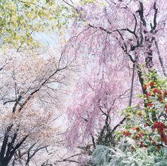 Rinko Kawauchi photography