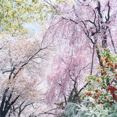 "TOP, untitled, 2009 © Rinko Kawauchi Rinko Kawauchi would be having an exhibition at Mountain Fold Gallery in New York for an entire month. The show, ""Condensation"", is a collection of new and old works from the Japanese photographer. I've..."