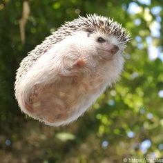 Thank you, hedgehogs. Thank you so much.