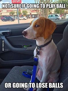Suspicious Puppy...