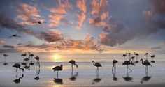 flamingos by Michael-Bies on 500px