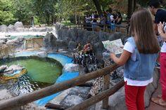 En el zoo de Madrid, Viendo a los pingüinitos