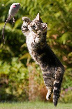 Claw-ful Cat Jokes