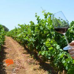 Il #negroamaro è ritenuto il principe dell'enologia salentina. E' un #vino colore rosso rubino intenso, al naso complesso, fruttato, con sentori di amarena e prugna, floreale con note di violetta. Vanta una buona struttura, è caldo e morbido, e non è raro trovare note vanigliate o sensazioni balsamiche di mentolo.  Buona giornata a tutti i #cultoridelvino dal Salento, terra di Negroamaro.  #wine #winelover #vineyard #vinorosso #degustazione #tasting #winetasting #winetaste #redwine…