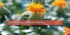 Doğal şifalı bitkiler arasında olan Aspir bir çok rahatsızlığa iyi gelir. Çiçekleri iyi bir adet söktürücüdür. Ateş düşürücü, şişlik indirici ve parazit gidericidir. Anti bakteriyel özelliği de bulunur. Aspir yağı kalp hastalıklarını önleyici ve koru...
