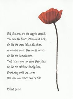 Red Red Rose By Robert Burns Art Print 18