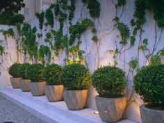 Learn how to work with a small patio with these container garden design ideas from HGTV Gardens.