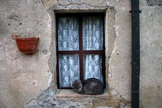 Cat sleeping on window in Saturnia, Italy | Flickr