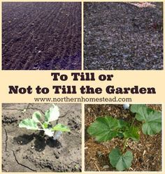 To Till or Not to Till the Garden is the question. Here we explain when tilling and digging the soil is a good idea, and when it can and should be avoided.