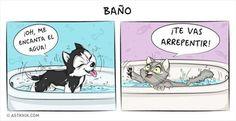 diferencias entre tener un perro o un gato como mascota - Taringa!