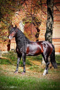 mooi paardje