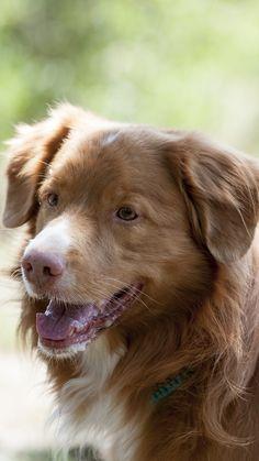Ausflugstipps für Hunde(besitzer): Vielseitig, interessant, hundefreundlich - im Weinviertel werden Sie fündig ... Golden Retriever, Freundlich, Dogs, Animals, Animais, Animales, Animaux, Doggies, Animal Books