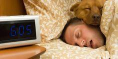 Dogs Bedtime Prayer