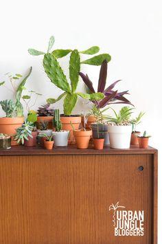 JOELIX.com | Urban Junge Bloggers 1 plant / 3 stylings #terracotta