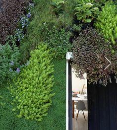 Muro Verde/Jardin Vertical de Verde 360º