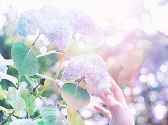 . . 背伸びして少しでも近づけたら。 . . 早く日曜日にならないかなぁ。 ドキドキワクワク楽しみん。 . . #JHP梅雨景色 #紫陽花 #flower #アジサイ #初夏 #はなまっぷ #team_jp_flower #indies_rain