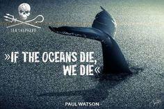Sea Shepherd: www.seashepherd.org Garbage In The Ocean, Fb Share, Sea Shepherd, Steve Irwin, Marine Conservation, Protest Signs, Quotes Deep Feelings, Life Pictures, Sea World