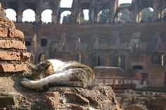 "The Roman ruins at Torre Argentina has become so overrun with cats that Italian archaeologists have given an eviction notice to the Torre Argentina Cat Shelter Association. The site which is in central Rome is affectionately known as the ""cat forum""."