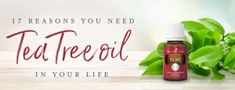 With a crisp, earthy scent and proven cleansing properties, Melaleuca alternifolia, also known as Tea Tree essential oil, is not only one . Essential Oils For Hair, Tea Tree Essential Oil, Lemon Essential Oils, Essential Oil Uses, Young Living Essential Oils, Tea Tree Oil Uses, Young Living Oils, Hair Treatments, Cleaning Solutions