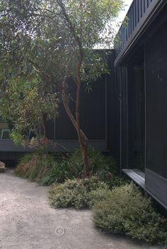 Australian Garden Design, Australian Native Garden, Bush Garden, Garden Pool, Coastal Gardens, Farm Gardens, Native Gardens, Garden Inspiration, Garden Ideas