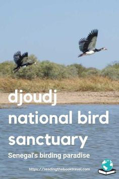 For serious birdwatchers and amateurs alike, the Djoudj National Bird Sanctuary and the Langue de Barbarie in northern Senegal are paradise. | Discover Senegal | Senegal tours | Bird watching holidays | Senegal safari | Senegal holidays | Senegal bird watching tours | Birding tours | Senegal trip