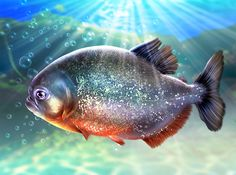Piranha on Behance