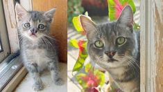 24 Pictures Of Cats That Totally Grew Up Too Fast – The Awesome Daily - Your daily dose of awesome