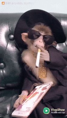 Monkey gangster - Funny Monkeys - Funny Monkeys meme - - Monkey gangster The post Monkey gangster appeared first on Gag Dad. Cute Funny Animals, Cute Baby Animals, Cute Dogs, Cute Babies, Funny Monkeys, Cute Animal Videos, Funny Animal Pictures, Funny Images, Monkey Memes