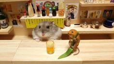 This Bar Features The Cutest, Furriest Bartender You Will Ever Meet #Pets #Animals #Hamster