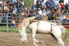 Yeehah! Festival de la Curd, St-Albert, ON Party Time, Horses, Animals, Animales, Animaux, Animal, Animais, Horse