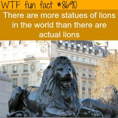 Lion statues - this is not a fun fact, it's actually really sad