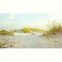 It's hard to believe, but this place is even prettier in person. Come see for yourself! | #VisitALCoast #DauphinIsland #Alabama #Beach #SeaOats |  : @krista_osborn