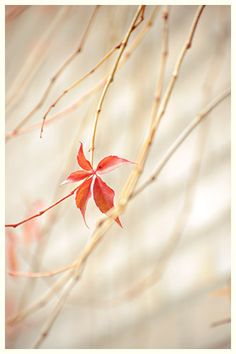 Autumn Leaf from Kayotic Kitchen blog photography