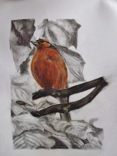 Soft Pastel and Pencil on Cartidge Paper Size X Paper Size, Robin, Pencil, Pastel, Paintings, Artist, Image, Cake, Paint