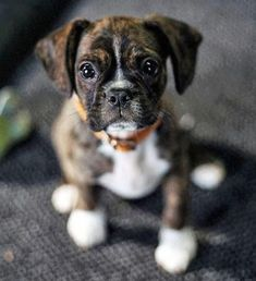 Pinning made easy! http://www.pinny.co Pin any photo in any website with a click. #BoxerDog