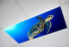 Sea Turtle Fluorescent Light Covers.