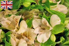 White British Standard Alstroemeria at New Covent Garden Flower Market New Covent Garden Market, British Standards, Flower Market, Marketing, Flowers, Irish, Plants, London, Modern