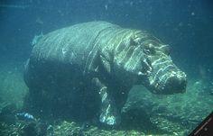 Kenya Tsavo West National Park   kenya tsavo west national park nature wildlife hippo mzima springs ...