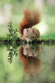 Thirsty SquirrelbyJulian Ghahreman Rad - in A.w.N. for Earth