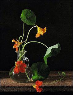 Bodegón floral