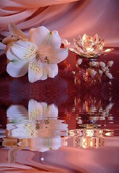 The perfect Flowers Ripples Water Animated GIF for your conversation. Discover and Share the best GIFs on Tenor. Flowers Gif, Floral Flowers, Lotus Flower, Gif Pictures, Images Gif, Gif Animé, Animated Gif, Image Fleur Rose, Beautiful Gif