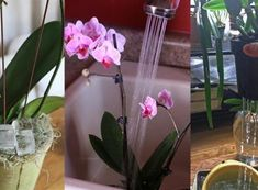 What to do for the blossoming of orchids? What to do for the blossoming of orchids? Indoor Plants, House Plants, Orchids, Glass Vase, Flowers, Inside Plants, Indoor House Plants, Foliage Plants, Houseplants