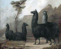 Jacques Laurent Agasse Alpacas