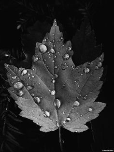 Leaf Photography, Autumn Photography, Urban Photography, Creative Photography, Simplicity Photography, Minimalist Photography, Wedding Photography, Black N White Images, Black And White Leaves