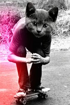 A skateboarding ? S) - cat head - boy - skateboard - pavement - black and white - light leak - hands clasped - staring at you