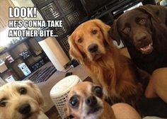 hungry dogs funny quotes cute memes animals quote dogs funny animals