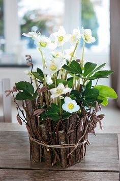 Bring a pretty Christmas rose indoors  You can miss the Christmas rose* when it flowers. Its papery blooms appear  at exactly the time you stop venturing out: midwinter. Which is a shame as  its beauty is just what is needed to dispel gloom. But there is an answer:  bring it indoors. A small clump sits happily in a pot and looks especially  good when wrapped with twigs and string, as here. Use rich compost such as  John Innes No3 and incorporate 25% grit and you'll get a succession of…