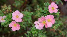 Váš Plants, Flora, Plant, Planting